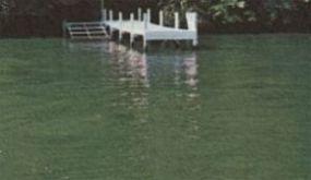 dyr i søer og vandhuller